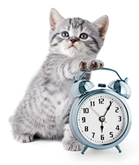 Clinic Hours at Mt. Sterling Veterinary Clinic in Mt. Sterling IL